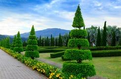 Pine trees garden Stock Image