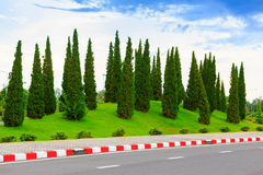Pine trees garden Royalty Free Stock Photos