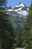 The pine trees and glaciers of Mount Rainier Royalty Free Stock Photography
