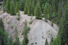 Mountain Pine Trees in Gravel. Pine trees growing in gravel on the side of a mountain Royalty Free Stock Photos