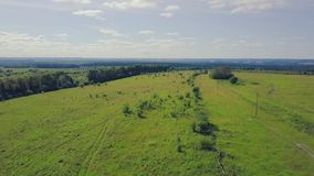 Pine trees green meadows and blue sky with clouds. Clip. Top view of the green field with forest.  stock video footage