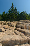 Pine trees growing on and into the Pink Granite slabs of rocks l Stock Image