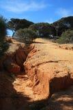 Pine trees growing on red- orange clay rocks. royalty free stock photos