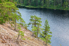 Pine trees growing on the rock face. Down towards the lake Royalty Free Stock Photography