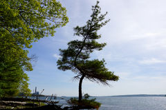 Pine trees grows funky on a beach on Cousins Island. With a pier and Large Gas Power Plant in the distance in Yarmouth, Maine Stock Image