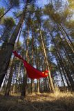Pine trees and hammock with tent in spring wood Stock Images