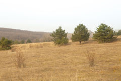 Pine trees on hill, beautiful landscape Royalty Free Stock Photos
