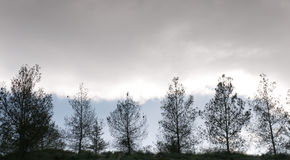 Pine trees in a hill and cloudy sky Royalty Free Stock Photo