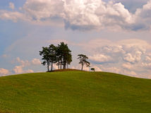Pine trees on the hill in Masuria (Mazury) Stock Image