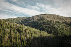 Pine trees and hills landscape in Poland. Spruce, pine trees forrest and hills landscape in Poland Stock Photo