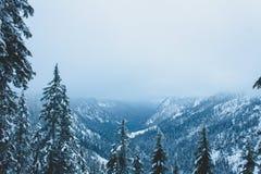 Valley of pines, Snow Lake, Washington. Pine trees on hillside and valley of Snow Lake in Washington, USA royalty free stock photos