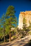 Pine Trees and Hoodoos Stock Images