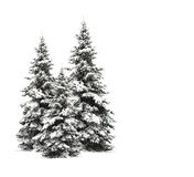 Pine trees isolated on white Stock Photography