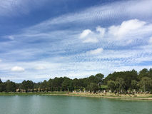 The pine trees with the lake in Dalat, Vietnam Stock Image