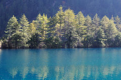 Pine trees and lake in Jiuzhaigou Stock Images