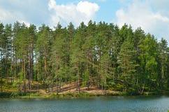 Pine trees on lake Royalty Free Stock Photo