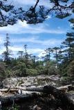 Pine trees and lake Royalty Free Stock Photos