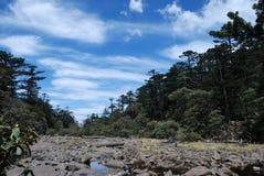 Pine trees and lake Royalty Free Stock Image