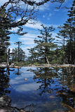 Pine trees and lake Stock Photo