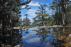 Pine trees and lake Stock Image