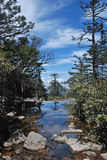 Pine trees and lake Stock Photography