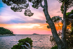 Pine trees leaning towards the sea in front of sunset Royalty Free Stock Photo