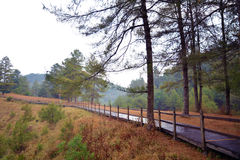 Pine trees and leaves with wet path Stock Photography