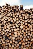 Pine trees log Stock Image