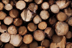 Pine trees logs background Royalty Free Stock Images