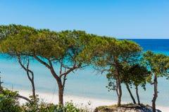 Pine trees in Maria Pia beach Royalty Free Stock Photo