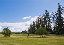 Pine Trees on a Meadow Royalty Free Stock Photo