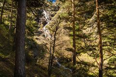 Pine trees and Mojonavalle waterfall in the background in a forest in Canencia Madrid in spring stock photo