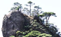 Pine trees in mountain peak stock image