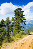 Pine trees at mountains Stock Photography