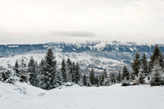 Pine trees and mountains covered in snow Stock Images