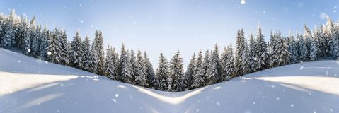 Pine trees in mountains and falling snow in fairy tale winter sunny morning. Soft ligth effect.