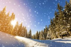 Pine trees in mountains and falling snow in fairy tale winter su Royalty Free Stock Photography