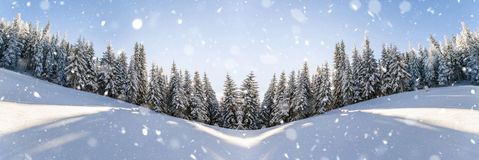 Pine trees in mountains and falling snow in fairy tale winter su Royalty Free Stock Photos