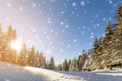 Pine trees in mountains and falling snow in fairy tale winter sunny morning. New year and Christmas celebration concept.  royalty free stock photo