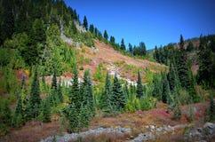 Pine trees, Mt. Rainier National Park Stock Photo