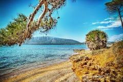 Pine trees by Mugoni shoreline Stock Photography