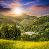Pine Trees Near Meadow In Mountains At Sunset Royalty Free Stock Image