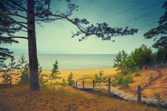 Pine trees near sea Royalty Free Stock Photos