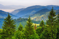 Pine Trees Near Valley In Mountains And Autumn Forest On Hillside Under Blue Sky With Clouds Royalty Free Stock Photos