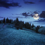 Pine trees near valley on mountain slope at night Stock Photos