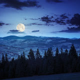 Pine trees near valley in mountains  on hillside at night Royalty Free Stock Photos