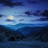 Pine trees near valley in mountains  on hillside at night Royalty Free Stock Photography
