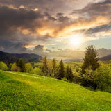 Pine trees near valley in mountains  on hillside at sunset Royalty Free Stock Images