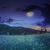 Pine trees near valley in mountains  on hillside under night sky. Mountain summer landscape. pine trees near meadow and forest on hillside under night sky with Stock Image
