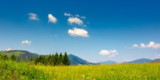 Pine trees near valley in mountains  on hillside under sky with. Mountain summer landscape. pine trees near meadow and forest on hillside under  sky with clouds Stock Photos